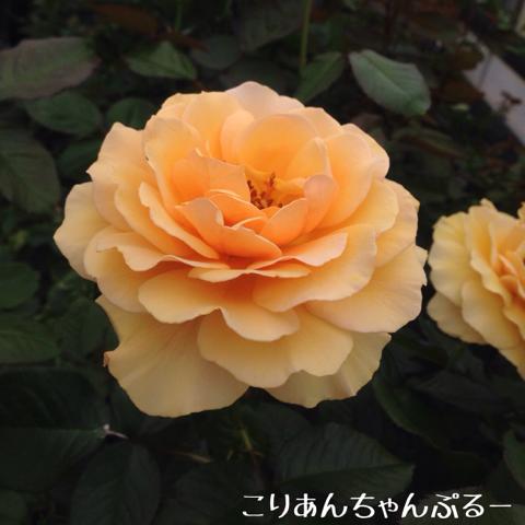 image-20160605171749.png